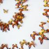 Thumbnail image for love monarchs, plant milkweed