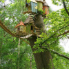 Thumbnail image for worth 1000 words: impossible treehouses