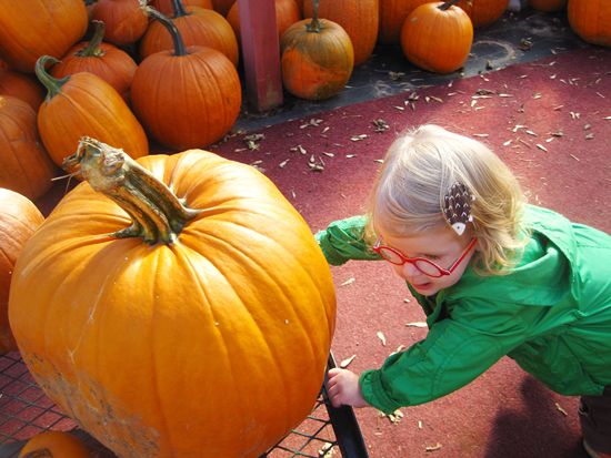 Toddler pushing a pumpkin cart