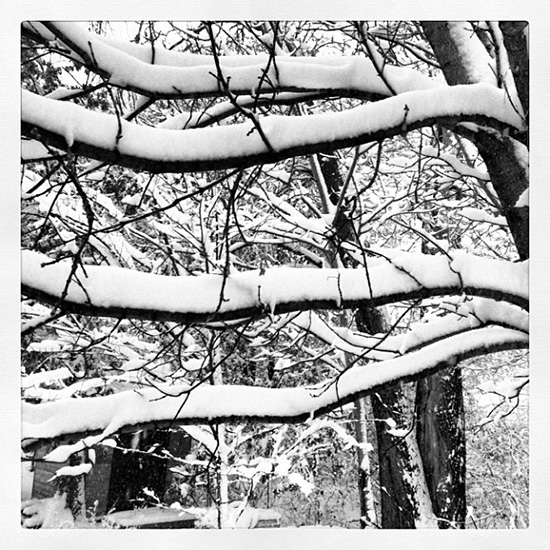 Fresh Snow on Tree Branches - Happy holidays this winter!